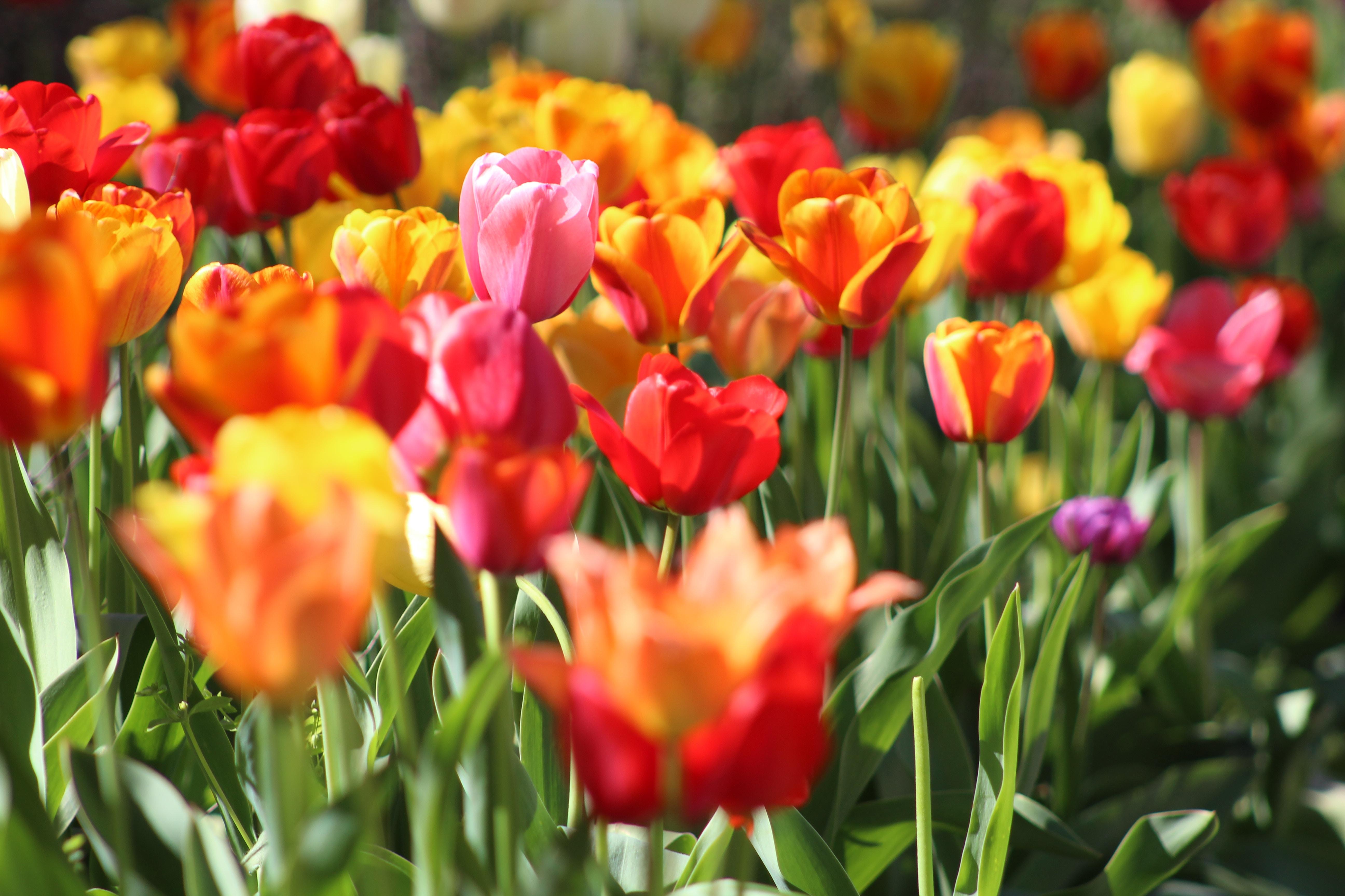 Spring Break April 6th – 13th